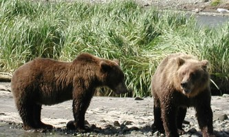 Alaska Ultimate Safaris P82300122019