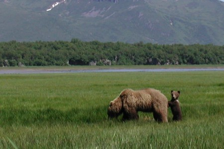 Alaska Ultimate Safaris Adventure Lodge