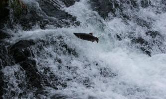 AWA Fishing IMG 29922019