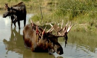 AK Wildlife Conservation Ctr AWCC 232019