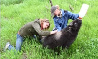 AK Wildlife Conservation Ctr Compressed III2019