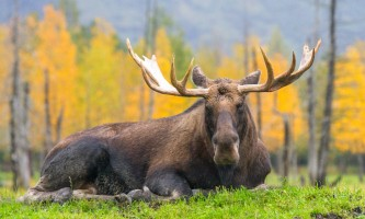 Alaska Wildlife Conservation Center AWCC 26362019