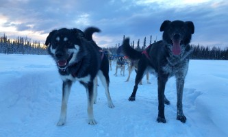 Liz Raines Failor Bowie and Hellhound alaska alaskan husky adventures