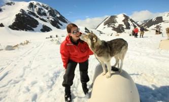 Alpine air alaska girdwood glacier dogsledding GCC mobil photo 1