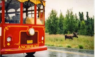 Anchorage Trolley Trolley Moose2019