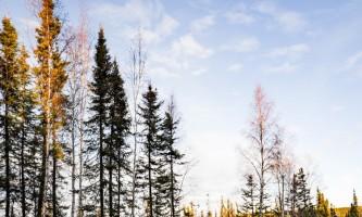 115 0026 alaska borealis basecamp fairbanks