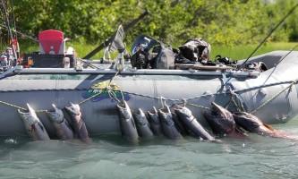 Copper River Guides Fishing 2021 Brandon Thompson 20180731 115119