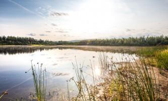 Fairbanks fountainhead wedgewood wildlife sanctuary WW SANC Alaska Org Listing 0014 7 3119 Fnthd Sanctuary 037