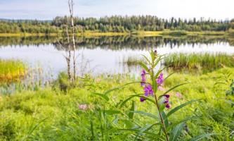Fairbanks fountainhead wedgewood wildlife sanctuary WW SANC Alaska Org Listing 0009 7 3119 Fnthd Sanctuary 126