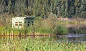 Fairbanks fountainhead wedgewood wildlife sanctuary WW SANC Alaska Org Listing 0011 7 3119 Fnthd Sanctuary 076