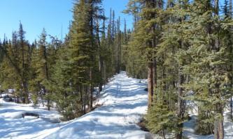 Fairbanks fountainhead wedgewood wildlife sanctuary WW SANC Alaska Org Listing 0000 L1090326