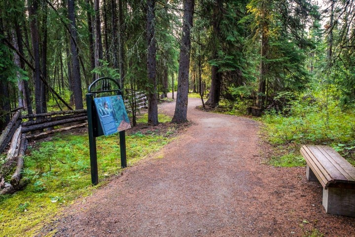 A serene forest path with a bench and an interpretive sign.