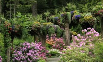 2017 Glacier Gardens Rhodies2019