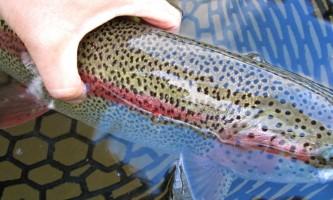 Hell bent fishing charters IMG 29092019