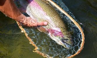 Hell bent fishing charters DSC 04682019