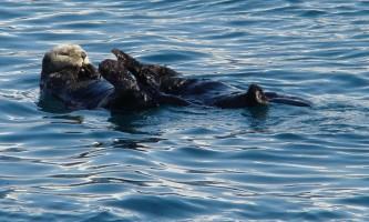 Kenai fjords tours Kenai Fjords Seward 0032019