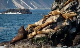 Kenai fjords tours Seward 0082019