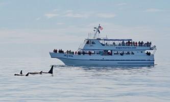 Major marine kenai fjords tours 8