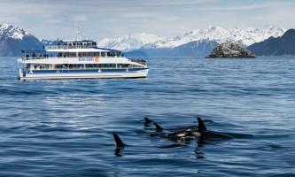 Major marine kenai fjords tours 7