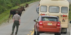 Narrated Tour Buses in Denali National Park