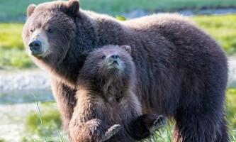 2018 Bears 12 c20172019