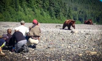 Pack Creek Bear Tours pack creek bear tours 20132019 2