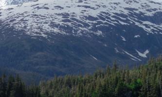 Whales alaska phillips 26 glacier cruise