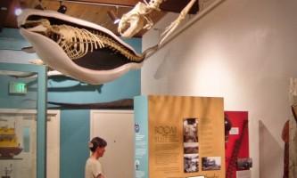 Alaska Homer TNC RSK 031 Alaska Channel Pratt Museum