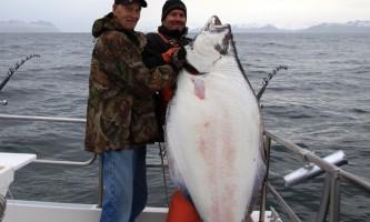 Steve Zernia Halibut Fishing Seward Alaska alaska profish n sea seward
