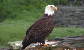 Rainforest sanctuary wildlife eagle center Bear Country Wildlife Expedition 2