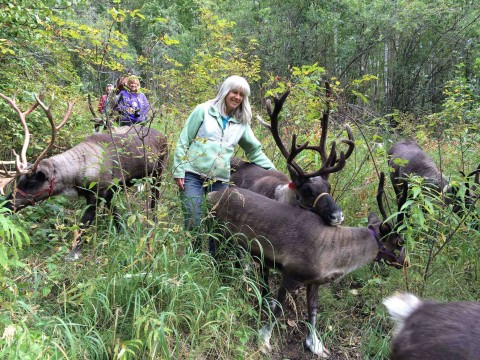 Owner walks with reindeer during the summer