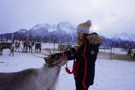 Reindeer Farm
