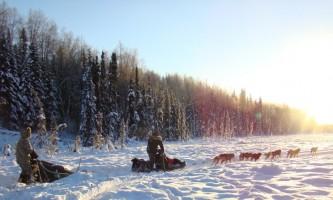 Salmon berr tours dog sledding 22