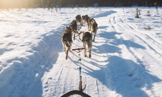 Salmon berr tours dog sledding 9