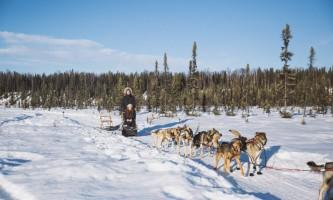 Salmon berr tours dog sledding 10
