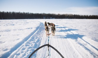 Salmon berr tours dog sledding 11