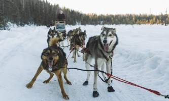 Salmon berr tours dog sledding 6