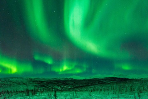 Vibrant green Northern Lights dance in the night sky above the Alaska landscape.
