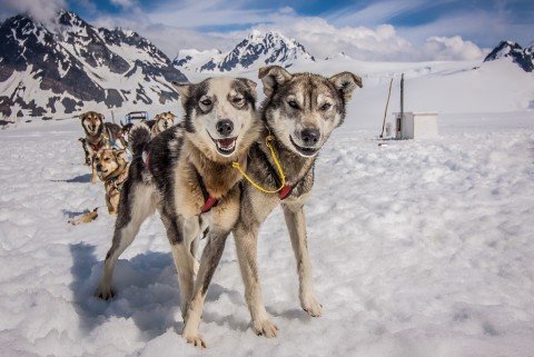 Sled dogs on snow surrounded by mountains.