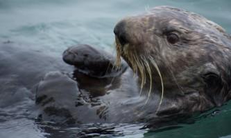 Seward ocean excursions 12