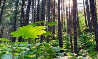 Seward wilderness collective 70156936 10219871469043108 3890812651562860544 n