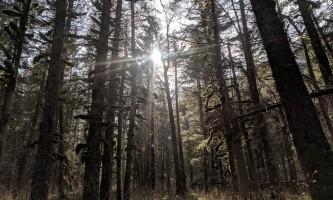 Seward wilderness collective 59418998 2610283229000574 6760599632838918144 o