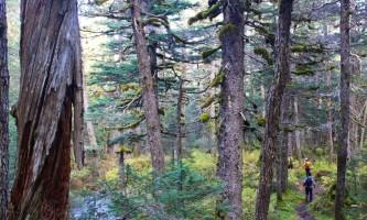 Trenton Gould Edit Forest Running alaska seward wilderness collective