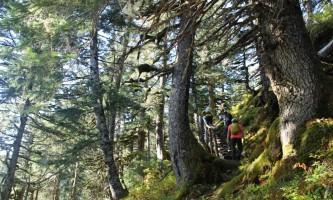 Trenton Gould Edited Green Forest Hikers alaska seward wilderness collective