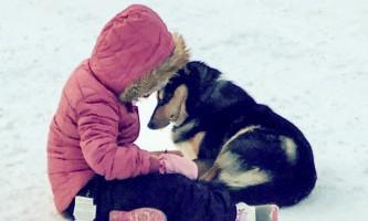 Snowhook adventure guides of alaska dog sledding tours PSX 20190106 092357