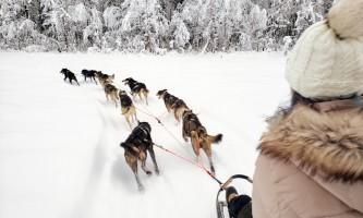 Snowhook adventure guides of alaska dog sledding tours PSX 20190123 234635