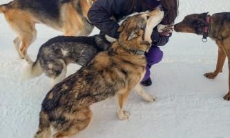 Snowhook adventure guides of alaska dog sledding tours PSX 20190214 215247