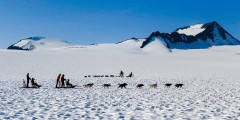 Snowhook Adventure Guides of Alaska: Dog Sled Tours