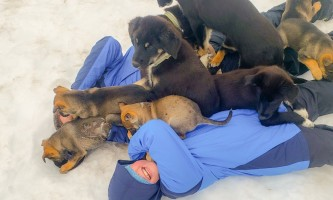 Snowhook adventure guides of alaska dog sledding tours PSX 20190714 142649