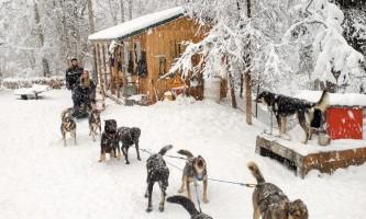 Snowhook adventure guides of alaska dog sledding tours PSX 20191119 125551